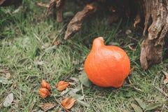 Autumn Pumpkin Thanksgiving Background - zucche arancio Fotografia Stock