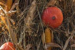 Autumn Pumpkin Thanksgiving Background - zucche arancio e cereale giallo immagini stock