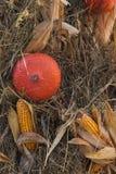 Autumn Pumpkin Thanksgiving Background - zucche arancio e cereale giallo fotografia stock