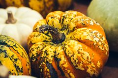 Autumn Pumpkin Thanksgiving Background - zucche arancio sopra fondo arrugginito fotografie stock