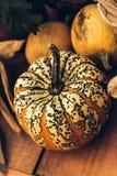 Autumn Pumpkin Thanksgiving Background - zucche arancio sopra fondo arrugginito fotografia stock libera da diritti