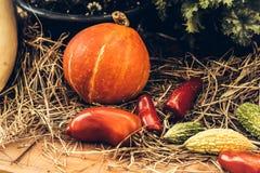 Autumn Pumpkin Thanksgiving Background - zucche arancio sopra fondo arrugginito immagine stock libera da diritti