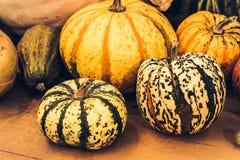 Autumn Pumpkin Thanksgiving Background - zucche arancio sopra fondo arrugginito Mucchio di Halloween warty fotografia stock