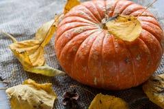 Autumn Pumpkin Thanksgiving Background - zucche arancio sopra il wo Fotografie Stock