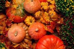 Autumn Pumpkin Thanksgiving Background - zucche, foglie e fiori arancio Immagini Stock Libere da Diritti