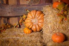 Autumn Pumpkin Thanksgiving Background - zucche, foglie e fiori arancio sopra il pavimento di legno Fotografia Stock