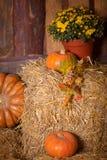 Autumn Pumpkin Thanksgiving Background - zucche, foglie e fiori arancio sopra il pavimento di legno Immagini Stock