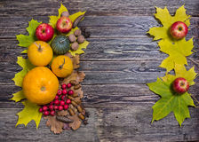 Autumn  pumpkin and vegetables Stock Image