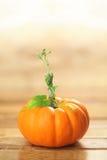 Autumn pumpkin Royalty Free Stock Photo