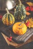 Autumn Pumpkins Arkivbilder