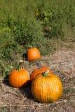 Autumn Pumpkins fotografía de archivo