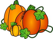 Autumn Pumpkins. Three Freshly Harvested Orange Pumpkins Royalty Free Stock Images