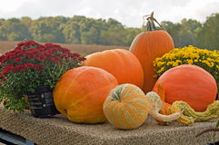 Autumn pumpkins Stock Photos