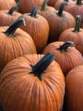 Autumn Pumpkins Stock Foto's