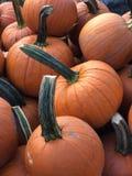 Autumn Pumpkins imagem de stock royalty free