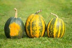 Autumn pumpkins Stock Photos