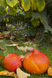 Autumn pumpkins Royalty Free Stock Images