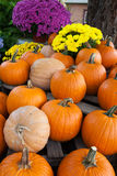Autumn pumpkins Royalty Free Stock Photography