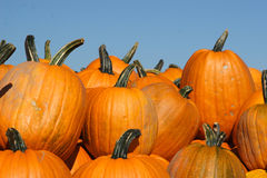 Autumn Pumpkins Stock Images
