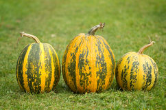 Autumn pumpkins. On the grass Royalty Free Stock Photography