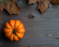 Autumn Pumpkins Photos stock