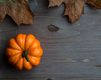 Autumn Pumpkins Stockfotos