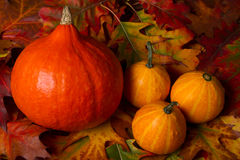 Autumn Pumpkins Stockbilder
