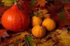 Autumn Pumpkins Imágenes de archivo libres de regalías