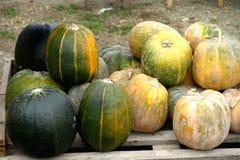 Autumn Pumpkins stockbild