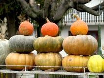Autumn Pumpkins lizenzfreie stockfotos