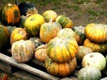 Autumn Pumpkins lizenzfreie stockfotografie