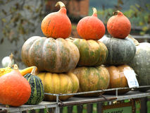 Autumn Pumpkins Arkivfoto