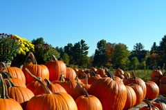Autumn Pumpkins Royalty-vrije Stock Foto