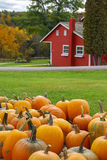 Autumn Pumpkins Immagine Stock