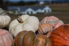 Autumn Pumpkins Arkivbild
