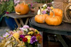 Autumn pumpkins. Pumpkins, Halloween and Thanksgiving decor Stock Image