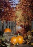 Autumn Pumpkins stock fotografie