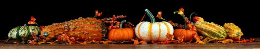 Autumn pumpkins background. Autumn, Fall pumpkins and gourds background isolated on black Stock Photos
