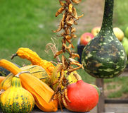 Autumn pumpkins. Beautiful colorful splendor of autumn pumpkins  shown Stock Photo