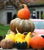 Autumn pumpkins. Beautiful colorful splendor of autumn pumpkins  shown Royalty Free Stock Photo