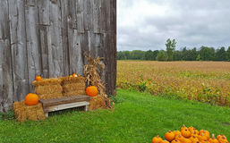 Autumn pumpkins with bench by barn Stock Photos