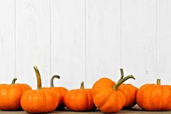 Autumn pumpkins bottom border against white wood Royalty Free Stock Images