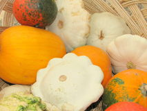 Autumn pumpkins closeup Royalty Free Stock Image