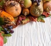 Autumn pumpkins Royalty Free Stock Photo