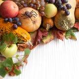 Autumn pumpkins Royalty Free Stock Photography