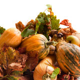 Autumn pumpkins Royalty Free Stock Image
