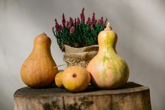 Autumn Pumpkins concept Stock Photos