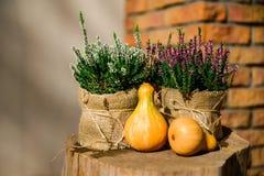 Autumn Pumpkins concept Stock Images