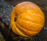 Autumn pumpkins on a concrete curb Stock Image