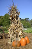 Autumn pumpkins and corn shocks. The orange pumpkins, corn shocks, and straw bales depict colors of the fall season Stock Photo